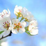 長崎県壱岐市の安産祈願 -聖母宮 (しょうもぐう)