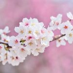 北海道小樽市の安産祈願 – 住吉神社 (すみよしじんじゃ)