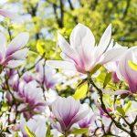 富山県射水市の安産祈願 – 放生津八幡宮 (ほうしょうづはちまんぐう)