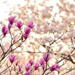 兵庫県神戸市の安産祈願 – 弓弦羽神社 (ゆずるはじんじゃ)