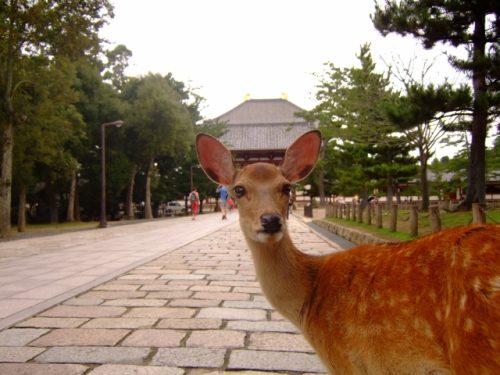 帯解寺に訪れるなら周辺観光もしながらゆっくり滞在も